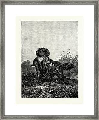A Retriever. After Deiker. A Type Of Gun Dog That Retrieves Framed Print by English School