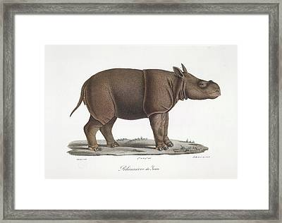 A Rhinoceros Of Java Framed Print by British Library