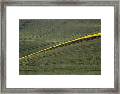 a Ribbon of Canola Framed Print