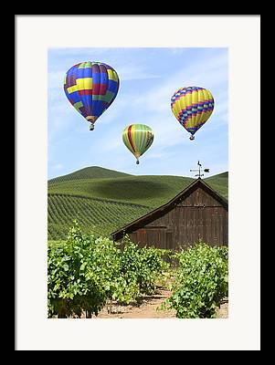 Grape Vines Digital Art Framed Prints