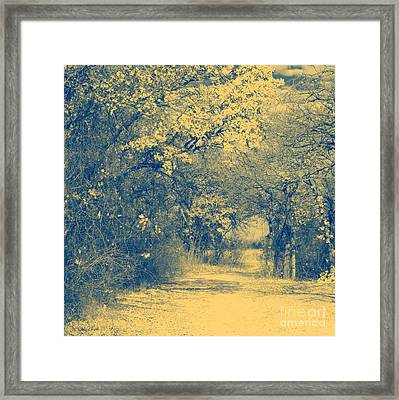 A Road Framed With Trees Framed Print by Mickey Harkins