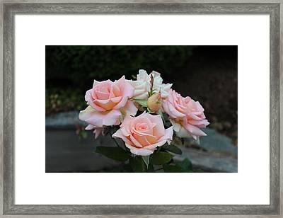 A Rose Bouquet Framed Print by Patricia Hiltz