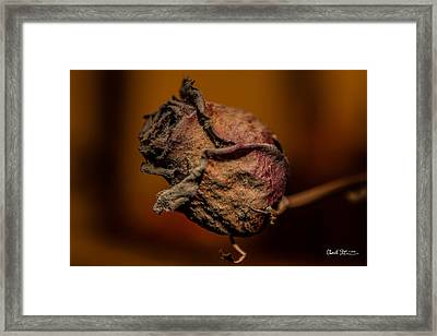 A Rose By Any Other Name... Framed Print by Charlie Duncan