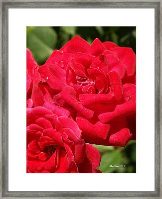 Framed Print featuring the photograph A Rose By Any Other Name by Dick Botkin