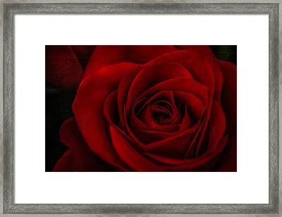 A Rose By Any Other Name Framed Print by Maria Robinson