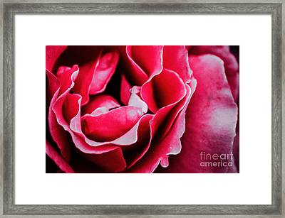 A Rose By Any Other Name  Framed Print