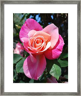 A Rose By Any Other Name Framed Print by Richard Hinger
