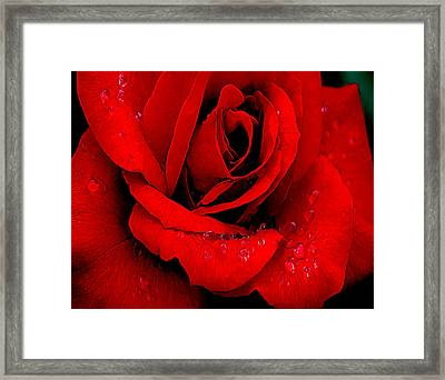A Rose For A Sweetheart Framed Print by Bob and Nadine Johnston
