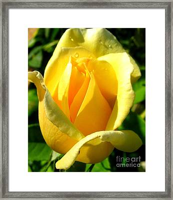 Framed Print featuring the photograph A Rose For My Friend by Janice Westerberg