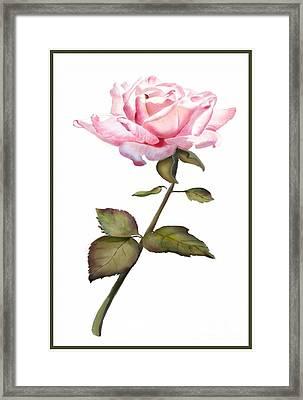 A Rose For You Framed Print