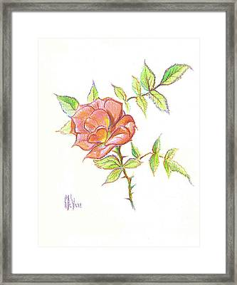 A Rose In Brigadoon Framed Print by Kip DeVore