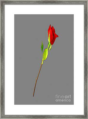 A Rose Is A Rose Is A Rose Framed Print