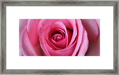 A Rose Is A Rose Is Framed Print by Silke Brubaker