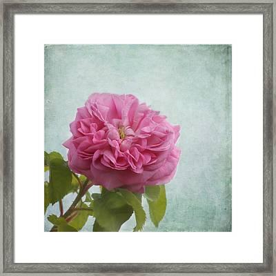 A Rose Framed Print by Kim Hojnacki