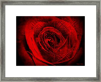 A Rose Framed Print by Kylie Sabra