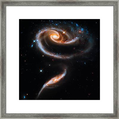 A Rose Made Of Galaxies Framed Print by Marco Oliveira