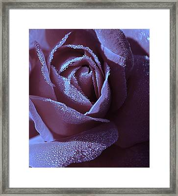 A Rose That Glitters Framed Print by Michelle Ayn Potter