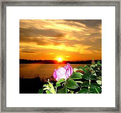A Rosy Sunset In Maine Framed Print