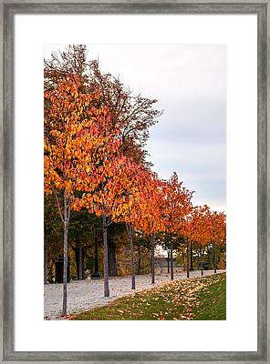 A Row Of Autumn Trees Framed Print