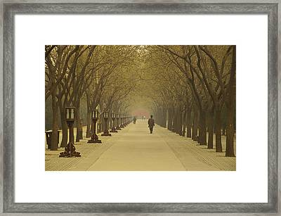 A Royal Stroll Framed Print by Aaron Bedell
