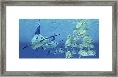 A School Of Ayu Fish Try To Escape Framed Print by Corey Ford
