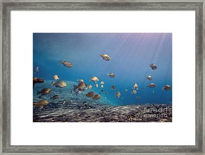 A School Of Bluegill And Sunfish  Swim Framed Print by Michael Wood
