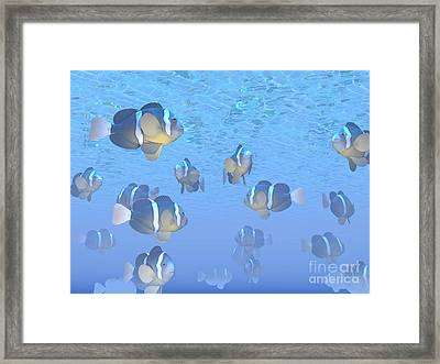 A School Of Clownfish Swimming Framed Print by Elena Duvernay