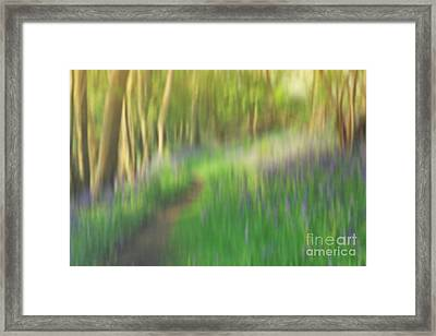 A Sea Of Bluebells Framed Print