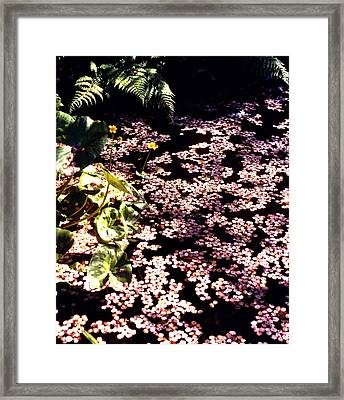 A Sea Of Pink Framed Print