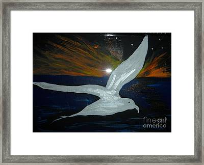 A Seagull At Night Framed Print by Marie Bulger