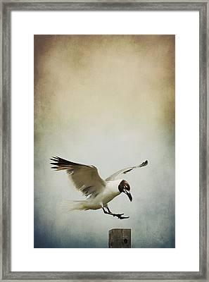 A Seagull's Landing Framed Print by Trish Mistric