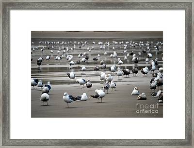 A Seagulls Life Framed Print by Sheldon Blackwell