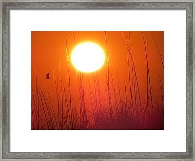 A Seagull's Sunrise Framed Print
