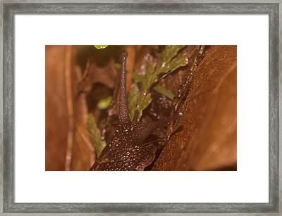 A Searching Snail Framed Print by Jeff Swan