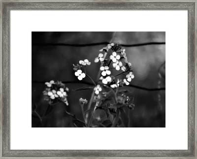 A Secret Place Monochrome Framed Print