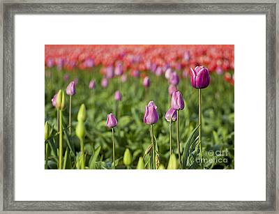 A Select Few Framed Print by Nick  Boren