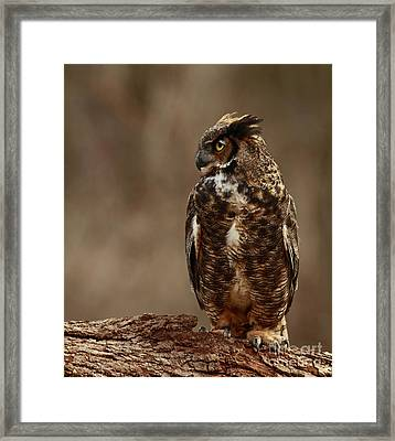 A Sense Of Mystery Of The Great Horned Owl  Framed Print