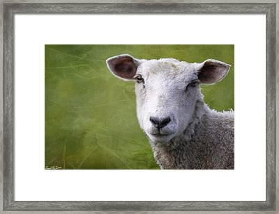 A Sheep Framed Print by David Simons