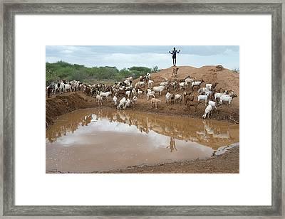 A Sheperd Tending Goats At A Waterhole Framed Print
