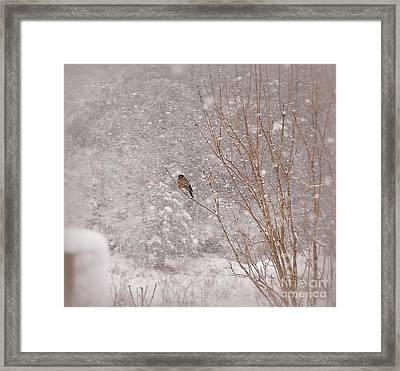 Framed Print featuring the photograph A Sign Of Spring by Brenda Bostic