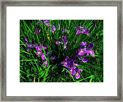 A Sign Of Spring Framed Print
