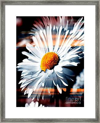 A Simple Daisy Framed Print