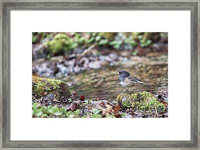 A Simple Drink Framed Print by Aaron Aldrich