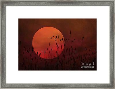 A Simple Sunset In June Framed Print by Tom York Images