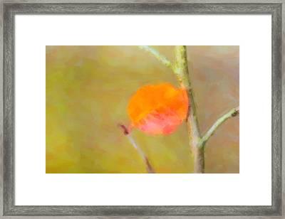 A Single Autumn Leaf Framed Print
