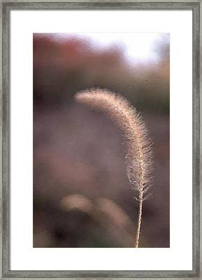 A Single Blade Of Feather Grass Framed Print by Mario Carini
