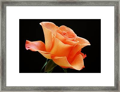A Single Bloom 1 Framed Print by Wendy Wilton