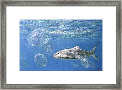 A Single Bonefish Glides Among Framed Print