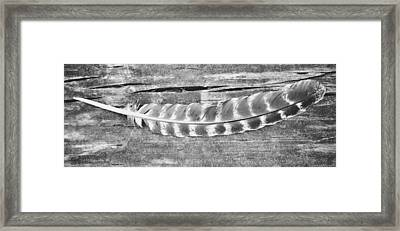 A Single Feather Framed Print by Chastity Hoff