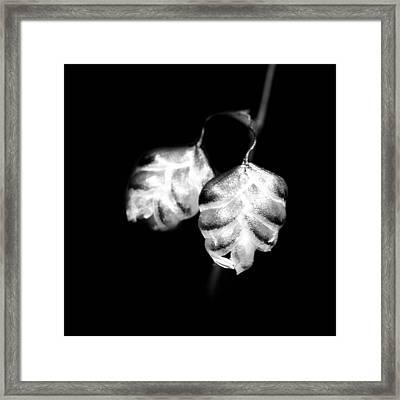 A Single Leaf  Framed Print
